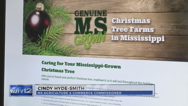 - Website Helps You Find Christmas Tree Farms In Mississippi