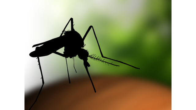 City of Clinton offers free mosquito tablets