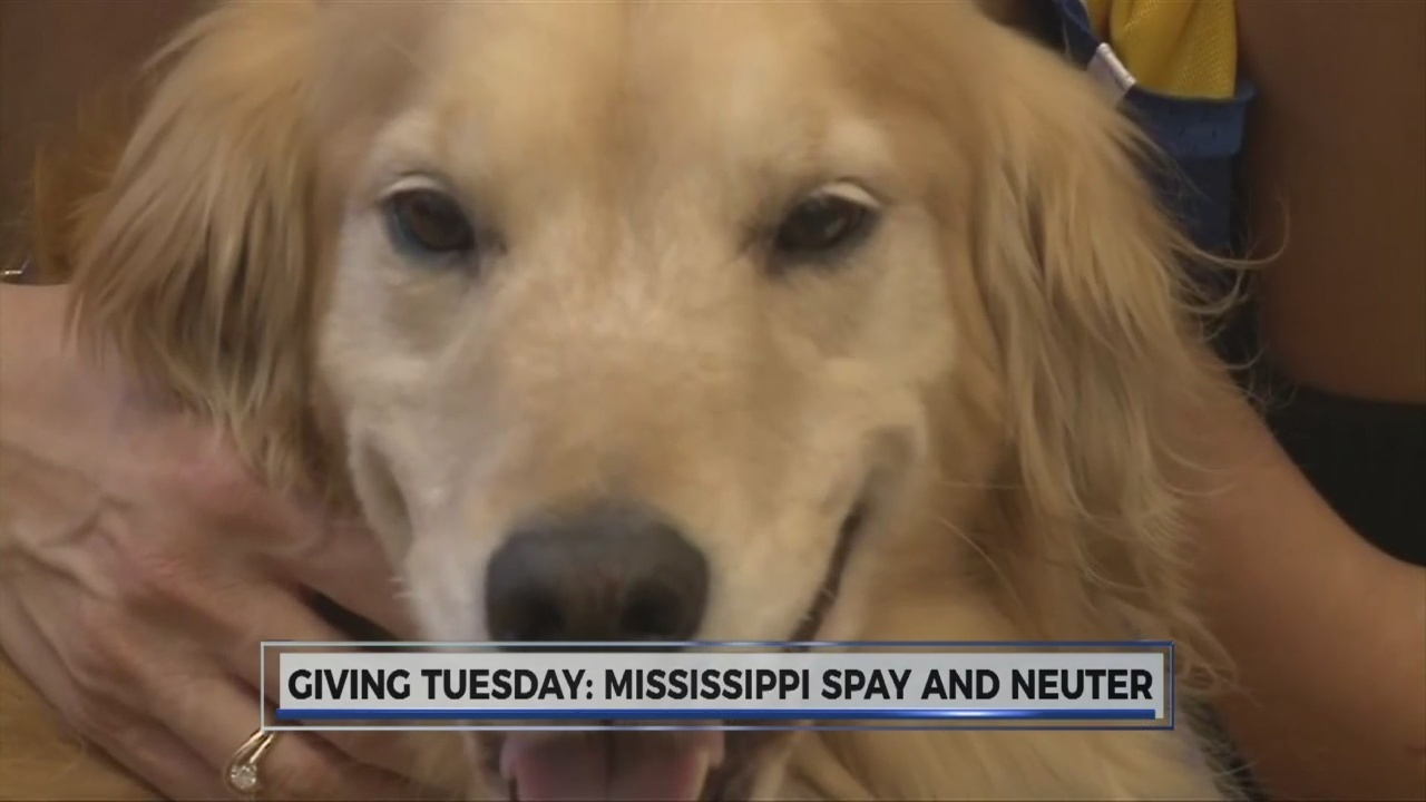 Giving Tuesday In The Metro