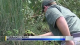 Rez makes progress removing invasive plant